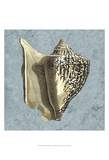 Stonewashed Shells VI Prints by  Vision Studio