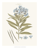 Bashful Blue Florals III Posters by John Miller