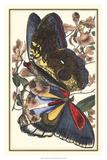 Butterfly IV Giclée-tryk