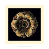 Small Classic Rosette III Giclee Print by  Vision Studio