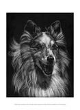 Canine Scratchboard VIII Posters by Julie Chapman