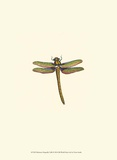Miniature Dragonfly I Posters by Vision Studio
