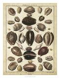 Cowrie Shells II Giclee Print by  Dezallier