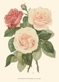 Vintage Roses II Prints by Vision Studio