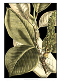 Tranquil Tropical Leaves II Giclee Print by  Vision Studio