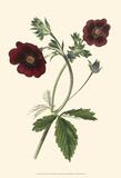 Florilea I Posters by  Edmonston & Douglas