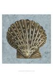 Stonewashed Shells IV Prints by  Vision Studio