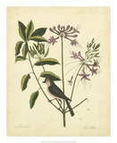 Catesby Bird & Botanical I Poster by Mark Catesby