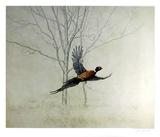 Pheasant Samletrykk av Chris Forrest