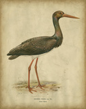 Vintage Heron I Prints by  Von Wright