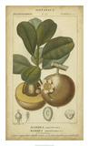 Exotic Botanica II Giclee Print by  Turpin