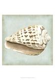 Sea Dream Shells II Prints by Vision Studio