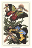 Butterfly III Giclée-tryk