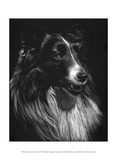 Canine Scratchboard VII Prints by Julie Chapman