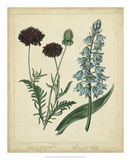 Cottage Florals VI Prints by Sydenham Teast Edwards