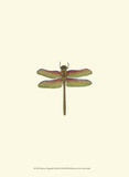 Miniature Dragonfly III Poster by  Vision Studio
