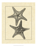 Antique&Deckle Vintage Starfish II Giclee Print