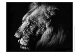 Wildlife Scratchboards I Posters by Julie Chapman