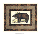 Rustic Bear Giclee Print by  Vision Studio
