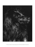 Canine Scratchboard VI Posters by Julie Chapman