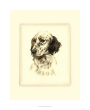 Danchin Setter Giclee Print by  Danchin