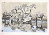 Zebras 2 Limited Edition by Fran Bull