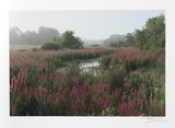Meadow Collectable Print by Harvey Edwards
