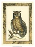 Majestic Perch II Giclee Print