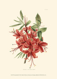 Flowering Shrub II Prints by Edmonston & Douglas