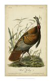 Audubon Wild Turkey Giclee Print by John James Audubon