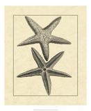 Antique&Deckle Vintage Starfish I Giclee Print
