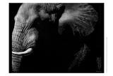 Wildlife Scratchboards III Posters by Julie Chapman
