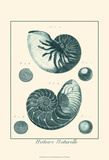 Shells in Aqua I Posters by  Vision Studio