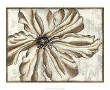 Fresco Flowerhead VI Giclee Print by Nancy Slocum