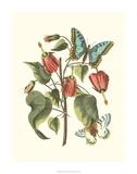 Midsummer Floral I Giclee Print