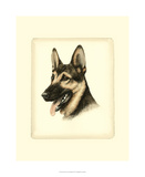Danchin German Shepard Giclee Print by  Danchin