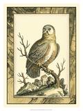 Majestic Perch I Giclee Print
