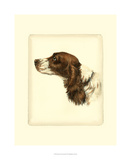 Danchin Cocker Spaniel Giclee Print by  Danchin
