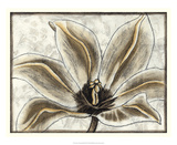 Fresco Flowerhead III Giclee Print by Nancy Slocum