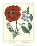 Gardener's Delight I Posters by Sydenham Teast Edwards