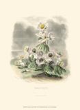 Le Fleur Animé III Prints by J.J. Grandville