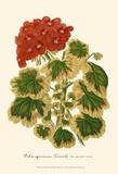 Hybrid Varieties IV Print by P. Stroobant