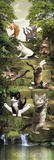 Yoga Cats-Steps Kunstdruck