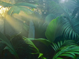 Rainforest Vegetation in Morning Light Fotodruck von Frans Lanting