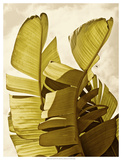 Palm Fronds III Prints by Rachel Perry
