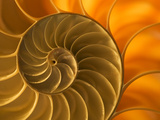 Nautilus Shell, South Pacific Ocean Photographic Print by Frans Lanting