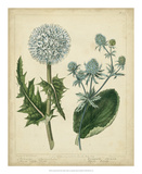 Cottage Florals III Prints by Sydenham Teast Edwards