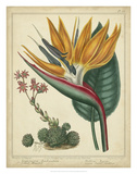 Golden Bird of Paradise Posters by Sydenham Teast Edwards