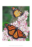 Monarch Posters by Marilyn Barkhouse