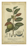 Exotic Botanica III Giclee Print by  Turpin